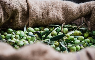 Olives - Lianos Oilve Oil